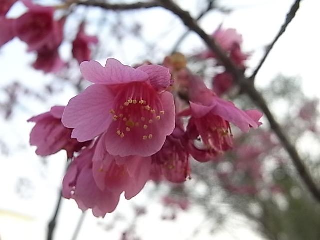 花々・・・_d0105967_19283721.jpg