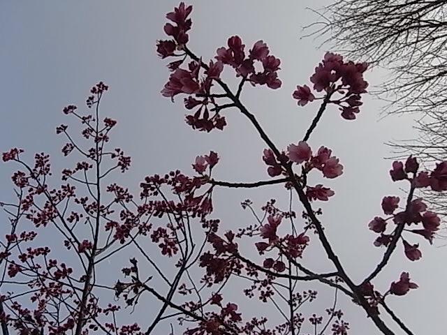 花々・・・_d0105967_19284792.jpg