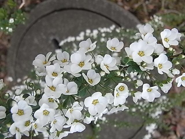 花々・・・_d0105967_19311916.jpg