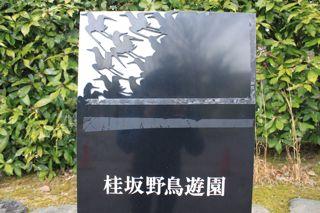 鳥見から天ぷらへ。_e0149587_17203785.jpg