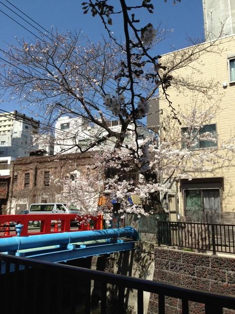 いのちの春。_a0112393_13353192.jpg