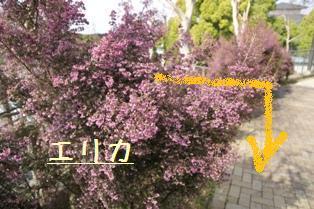 f0203094_1021687.jpg