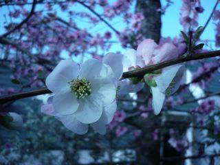 春の微笑み_c0203401_8202597.jpg