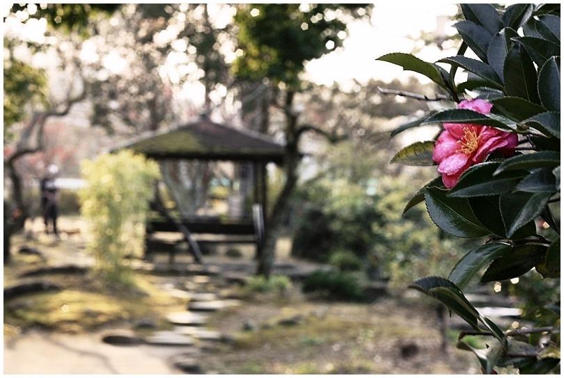 知らぬ間に春が来て_d0151003_0182140.jpg