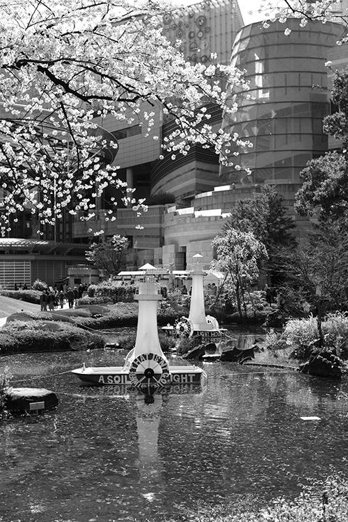 今日は行く先々で桜が満開!八丁堀 - 六本木。田村写真では話しが満開!_b0194208_2132714.jpg