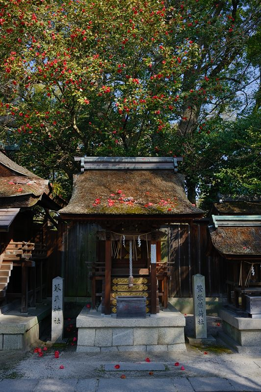 宗像神社の椿_f0032011_19472516.jpg