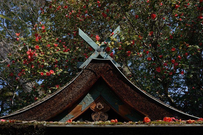 宗像神社の椿_f0032011_19473513.jpg
