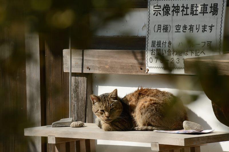 宗像神社の椿_f0032011_19484776.jpg