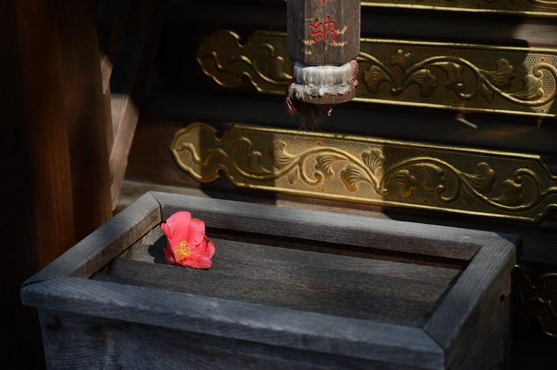 宗像神社の椿_f0032011_1948562.jpg