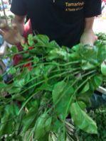 ラオス ルアンプラバーンで料理教室_e0134337_17131036.jpg