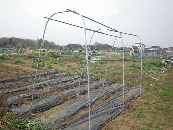 今年の吊り栽培準備_a0139242_691298.jpg