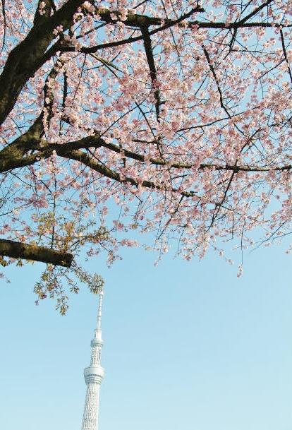 東京スカイツリーと桜  _b0112443_23232179.jpg