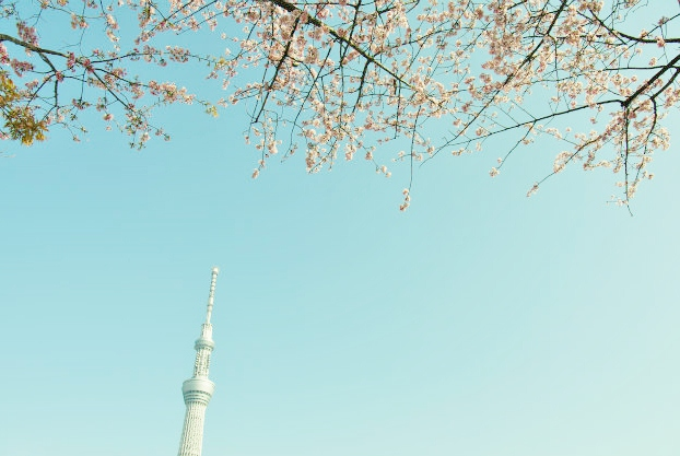 東京スカイツリーと桜  _b0112443_239960.jpg