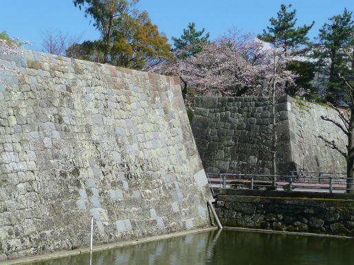 県庁廻りの桜_c0087349_5182749.jpg