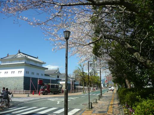 県庁廻りの桜_c0087349_5185398.jpg