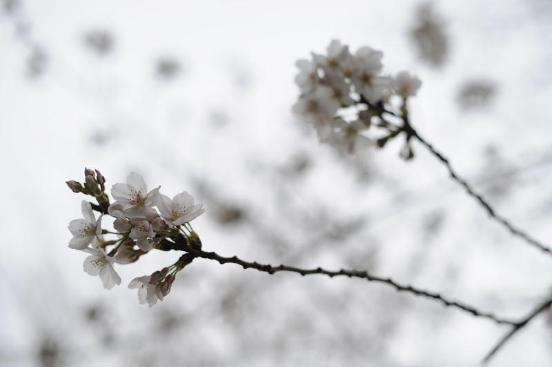 花咲かガールズ_c0049455_15345586.jpg