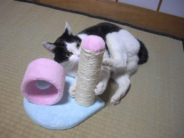 おもちゃはつまんない・・_d0116059_2222342.jpg