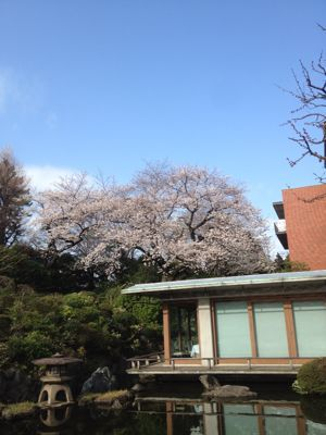 近所の春_c0204289_1814294.jpg