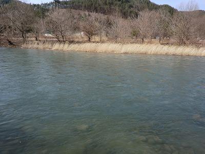 川の水が_b0219993_1545441.jpg