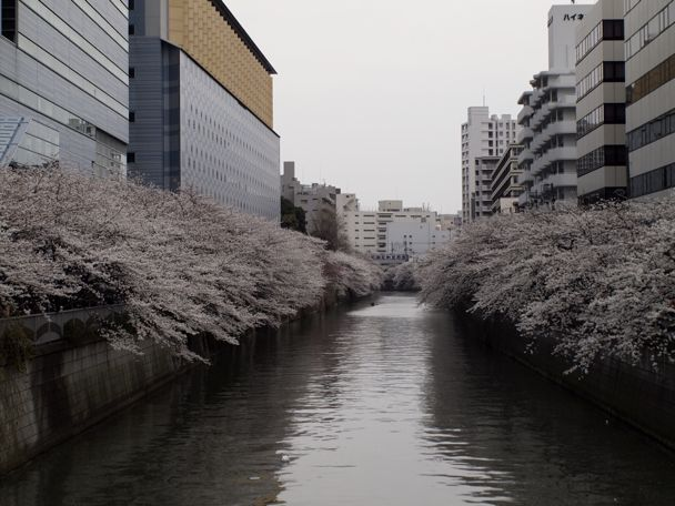 横滑り防止装置 OFF sakura mankai_d0147406_1356323.jpg