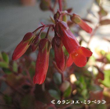 b0126308_15181692.jpg