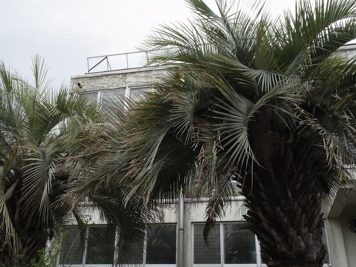 井の頭公園 熱帯鳥温室_e0276411_2245556.jpg
