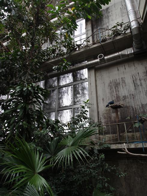 井の頭公園 熱帯鳥温室_e0276411_22461965.jpg
