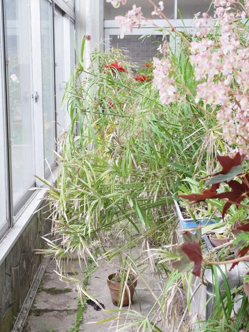 井の頭公園 熱帯鳥温室_e0276411_2246533.jpg