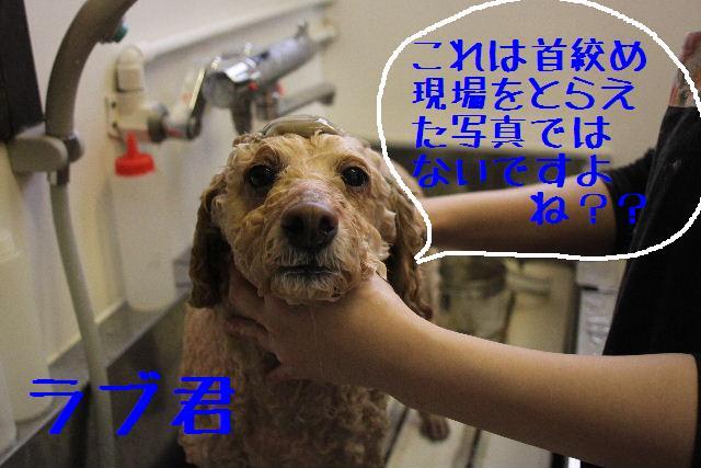b0130018_051511.jpg