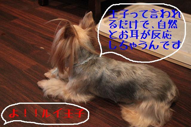 b0130018_057569.jpg