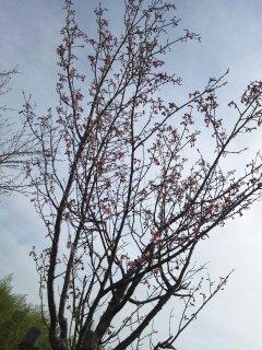 春のお届けもの・・・♪3/23①_b0247223_14543915.jpg