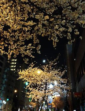広尾、明治通りの桜2013_f0165332_1523317.jpg