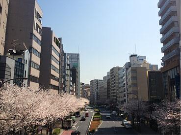 広尾、明治通りの桜2013_f0165332_152493.jpg
