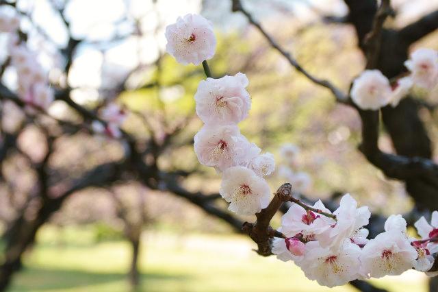 浜離宮恩賜公園の春  _b0112443_21251428.jpg