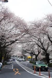 桜のお花見_a0163160_23421676.jpg