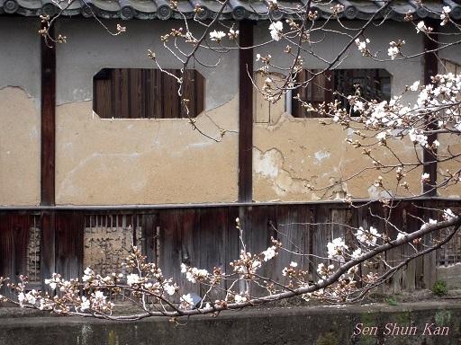 京都の桜 2013年3月23日_a0164068_21342373.jpg