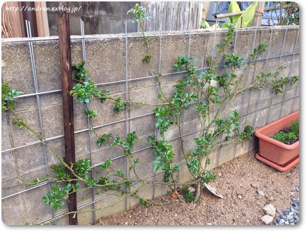 【ガーデニング】庭木たちが活動をはじめました。_c0176271_2335411.jpg