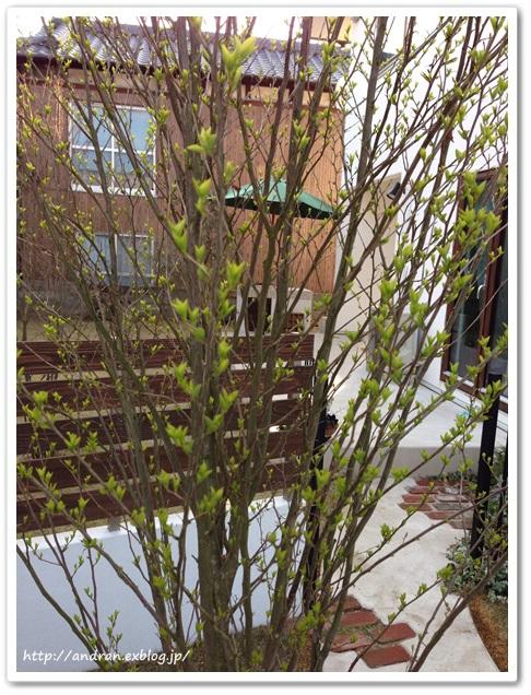 【ガーデニング】庭木たちが活動をはじめました。_c0176271_234564.jpg