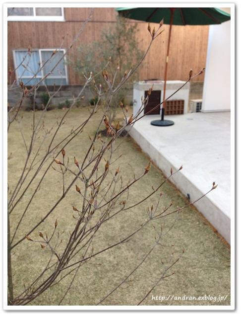 【ガーデニング】庭木たちが活動をはじめました。_c0176271_2371711.jpg