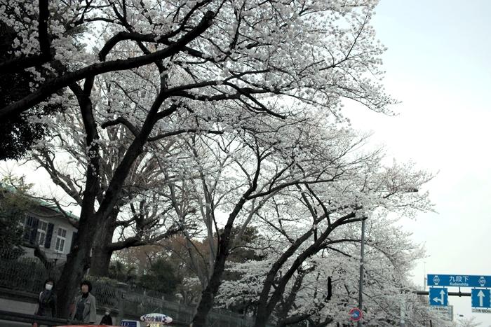 花曇り_c0182775_2139856.jpg