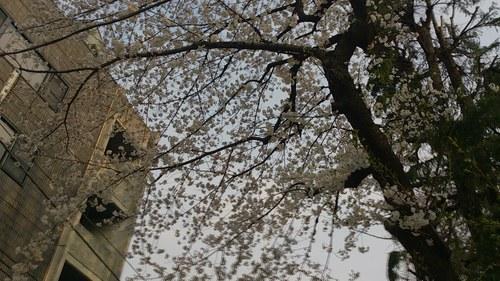 『春満開』_a0075684_23151046.jpg