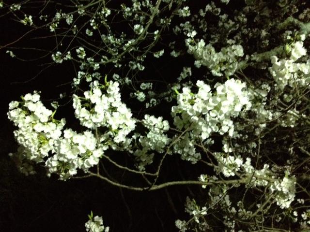 b0081987_20104393.jpg