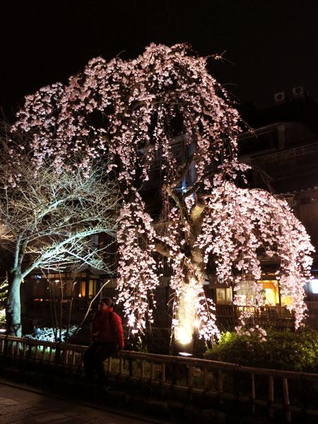 桜が咲き始めました。_c0108595_0583294.jpg