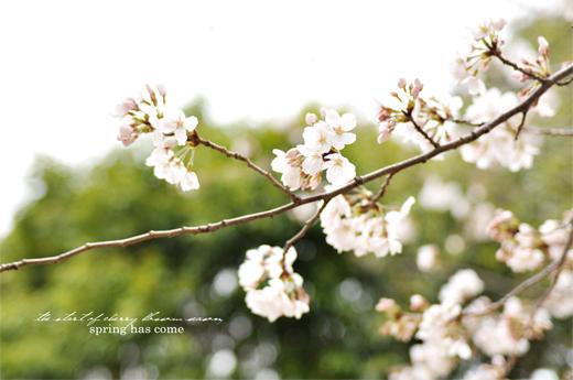 きょうのさくら (3月23日)_d0174704_15304193.jpg