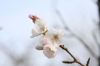 お花見の季節になりました_e0179508_1238391.jpg
