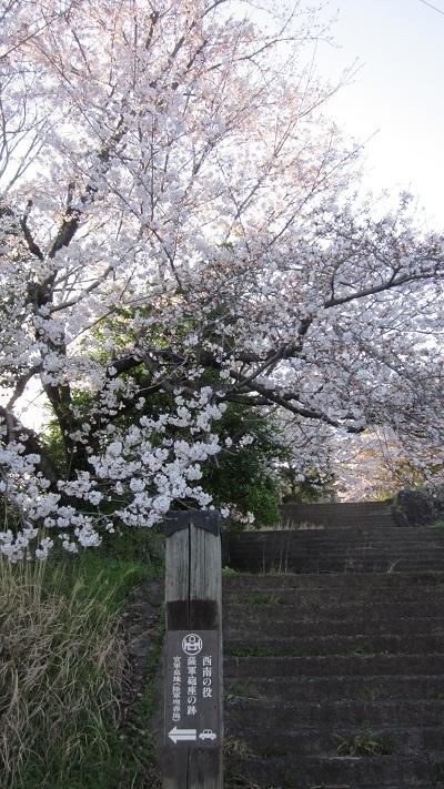 ❀❀~花岡山の桜~2013年3月❀❀_b0228113_11445133.jpg