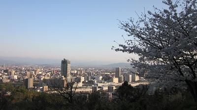 ❀❀~花岡山の桜~2013年3月❀❀_b0228113_1146306.jpg