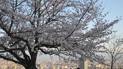 ❀❀~花岡山の桜~2013年3月❀❀_b0228113_11465836.jpg