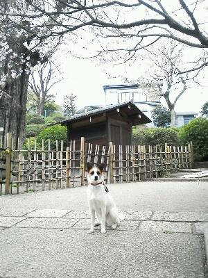 桜_b0274815_21523133.jpg