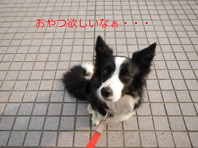 a0232619_1763740.jpg